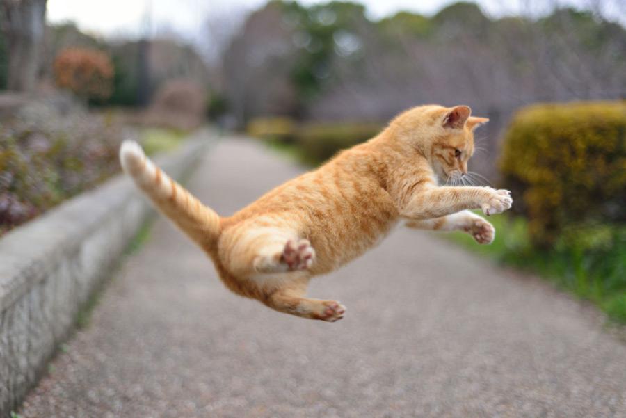 一人暮らし,虫駆除,害虫駆除,猫
